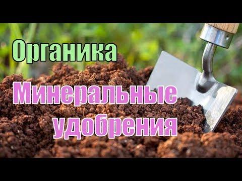 Основное внесение минеральных и органических удобрений под малину и ежевику