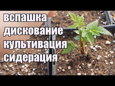 Подготовка почвы для посадки ежевики и малины