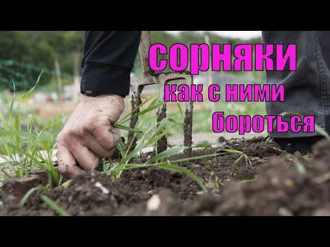 Как бороться с сорняками на малине и ежевике