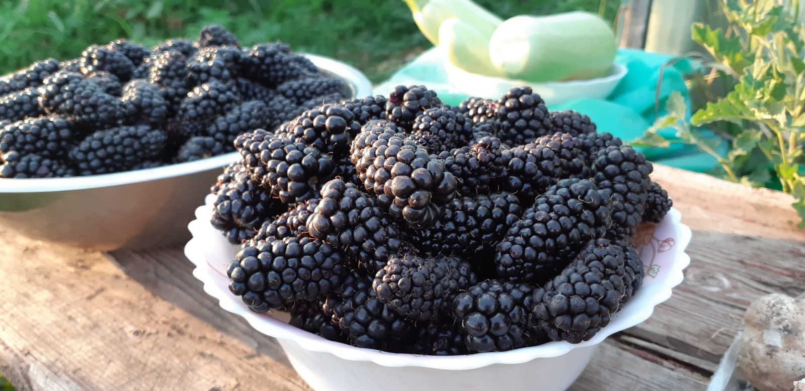 Первые ягоды ежевики Карака Блэк