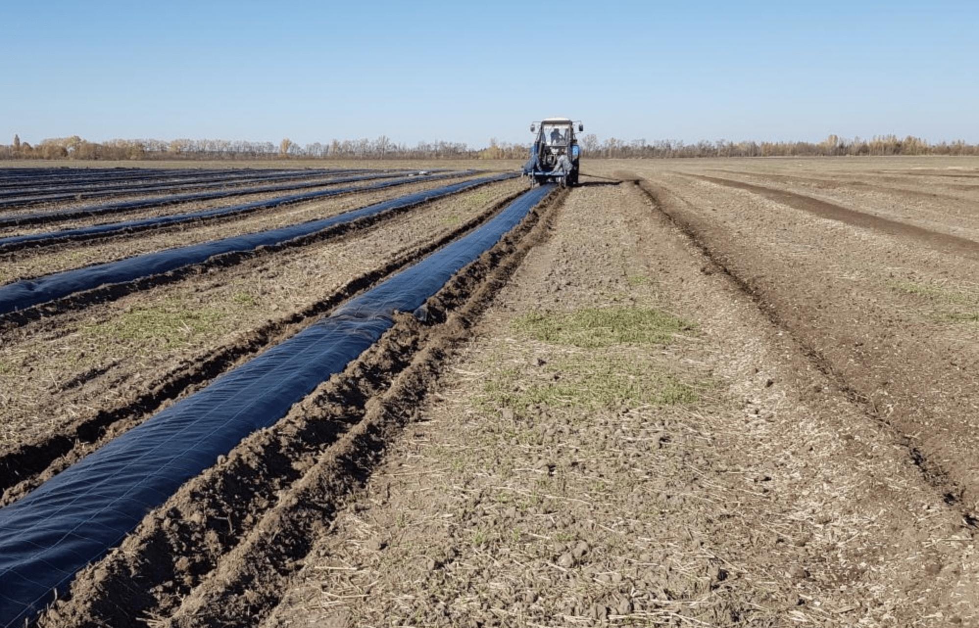 Использование субстрата для выращивания черники (голубики) высокорослой